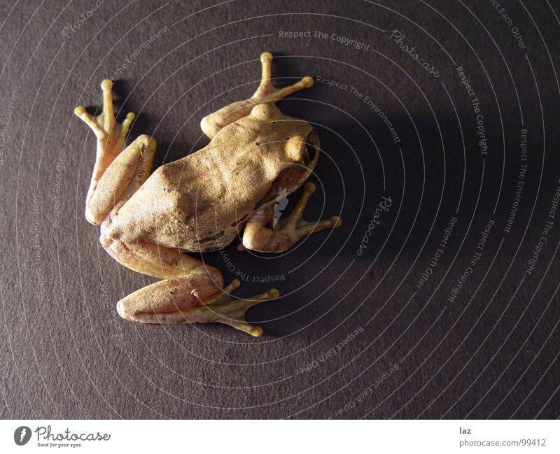 Da lang? Wasserfrosch Tier Zoologie springen Kaulquappe grün braun Pflanze Küssen hüpfen Farbe Muster beige Frühling Bach Fragen feucht knotig Teich Sumpf