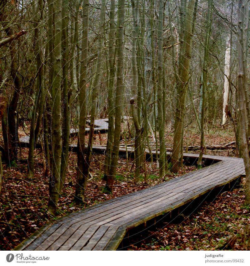Der Weg Winter Blatt Wald Holz Wege & Pfade Linie Klarheit Gesetze und Verordnungen Steg Nationalpark Zickzack Vorschrift