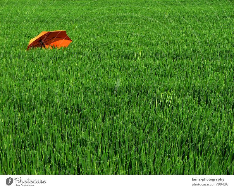 In die Ecke gedrängt Cloppenburg Regenschirm Sonnenschirm Unwetter Wolken Gras Halm Wiese Sommer Feld grün Frühling ruhig Einsamkeit Erholung Sonnenbad