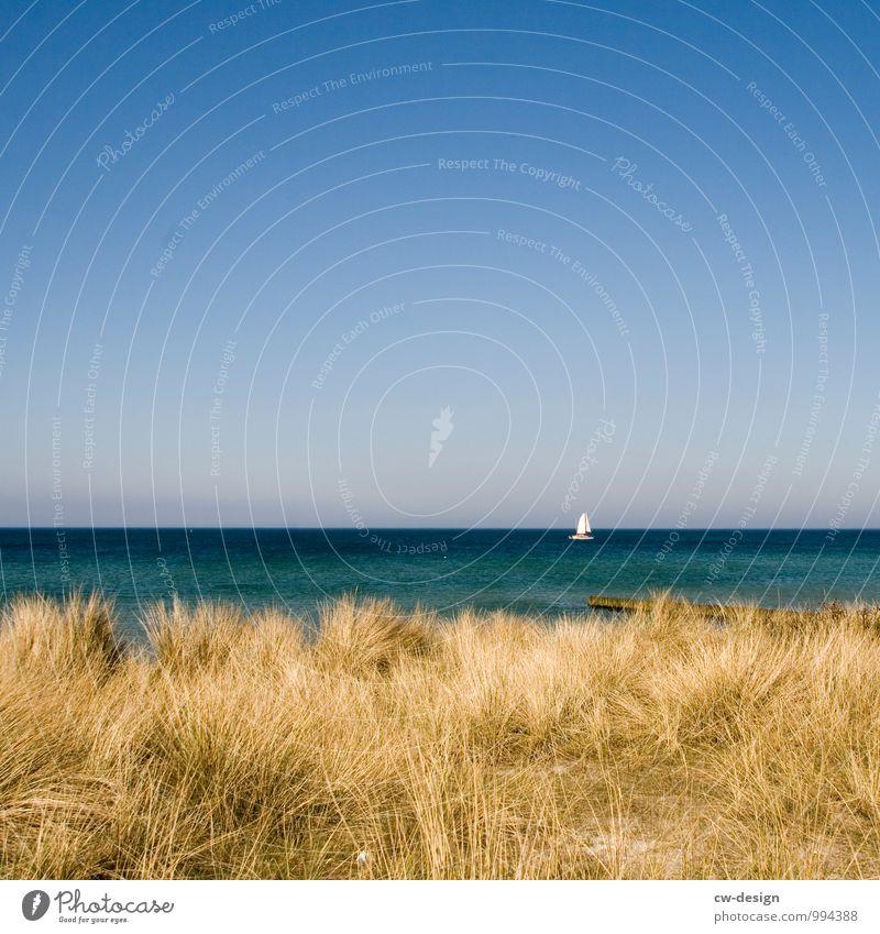 Segelschiff segelt auf Ostsee an Hiddensee vorbei Strand Düne Segeln Dünengras Meer Küste Himmel Außenaufnahme Farbfoto Landschaft Ferien & Urlaub & Reisen