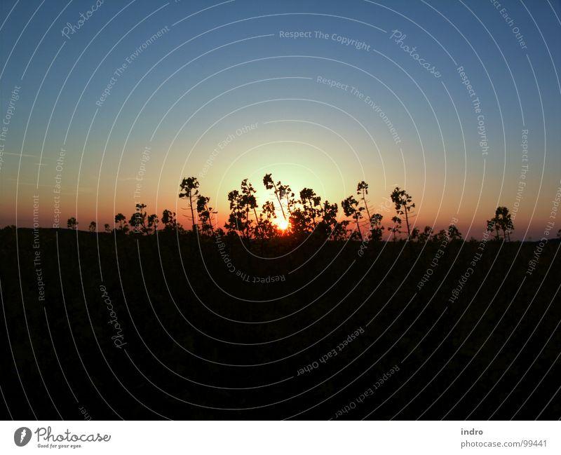 Abend Sonnenuntergang Stimmung Gegenlicht ruhig Natur Landschaft