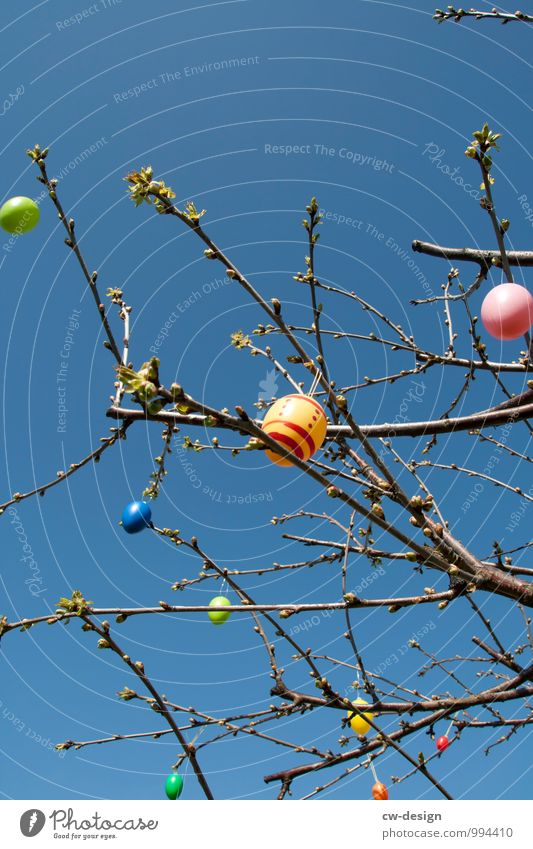 Jährliche Gedächtnisfeier der Auferstehung Jesu Christi Himmel blau Pflanze Sommer Baum Frühling Stil Religion & Glaube Feste & Feiern Garten Lebensmittel