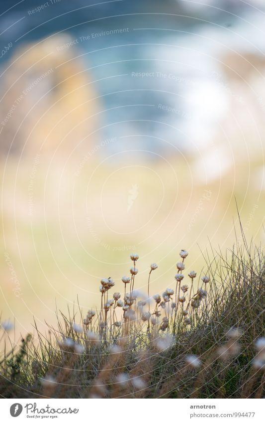 Cliffhanger Wassersport Landschaft Pflanze Sommer Blume Gras Blüte Wellen Küste Meer Schwimmen & Baden beobachten Wärme blau braun grün Gelassenheit ruhig