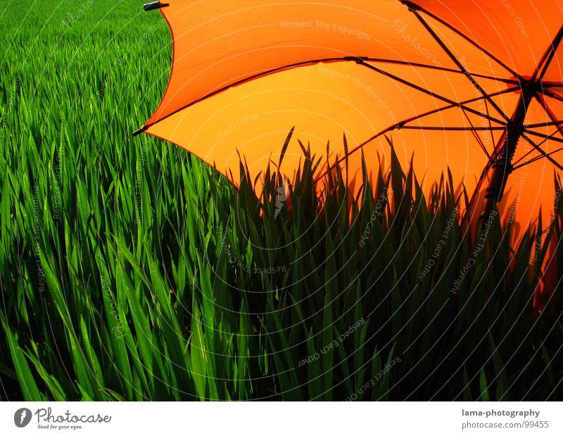 Schattenspender Natur grün Pflanze Sommer Blume Farbe Einsamkeit Wolken ruhig Erholung Ferne Umwelt Landschaft Wiese Gras Frühling