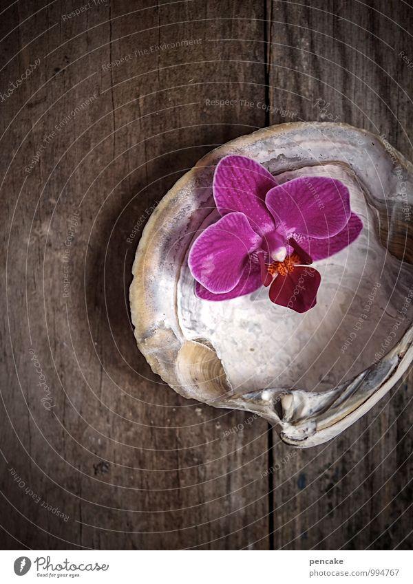 badetag exotisch schön Körperpflege Natur Frühling Zeichen ästhetisch authentisch Duft feminin rosa Design Wellness Orchideenblüte Auster Muschelschale