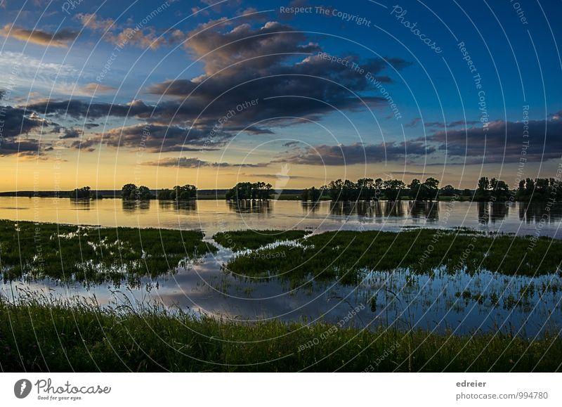 Abendstimmung an der Elbe Natur Landschaft Wasser Himmel Wolken Sonnenaufgang Sonnenuntergang Baum Flussufer Schnakenburg Einsamkeit Hochwasser Farbfoto