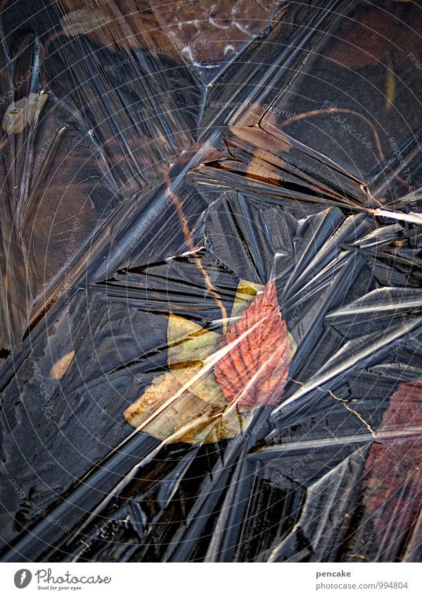wasserzeichen | eismalerin Natur schön Wasser Winter dunkel Blüte Kunst Eis Design ästhetisch einzigartig Urelemente Zeichen Frost Herbstlaub Teich