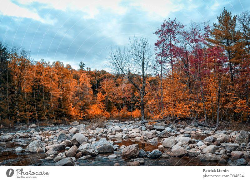 Herbstwald Himmel Natur Ferien & Urlaub & Reisen Pflanze Baum Landschaft Wolken Ferne Wald Berge u. Gebirge Umwelt Leben Freiheit Stein Tourismus