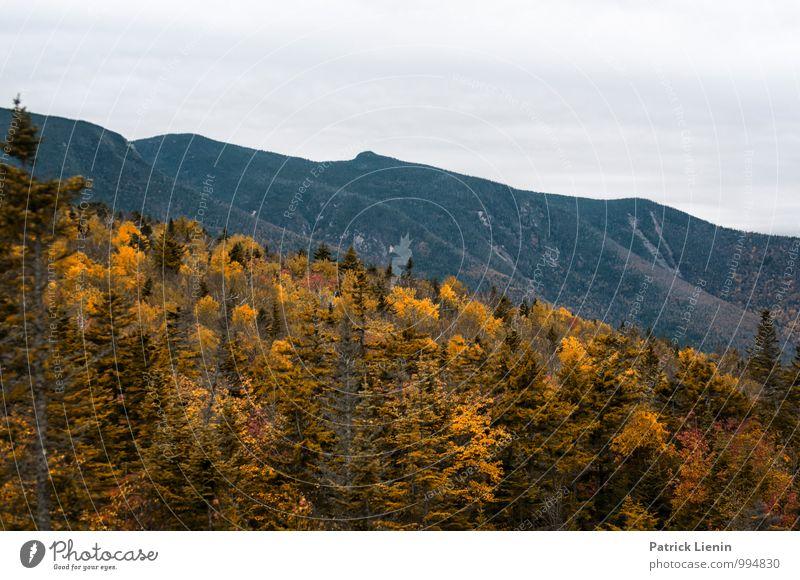 Herbstfärbung in den White Mountains harmonisch Wohlgefühl Zufriedenheit Sinnesorgane Erholung ruhig Tourismus Ausflug Abenteuer Ferne Freiheit Expedition