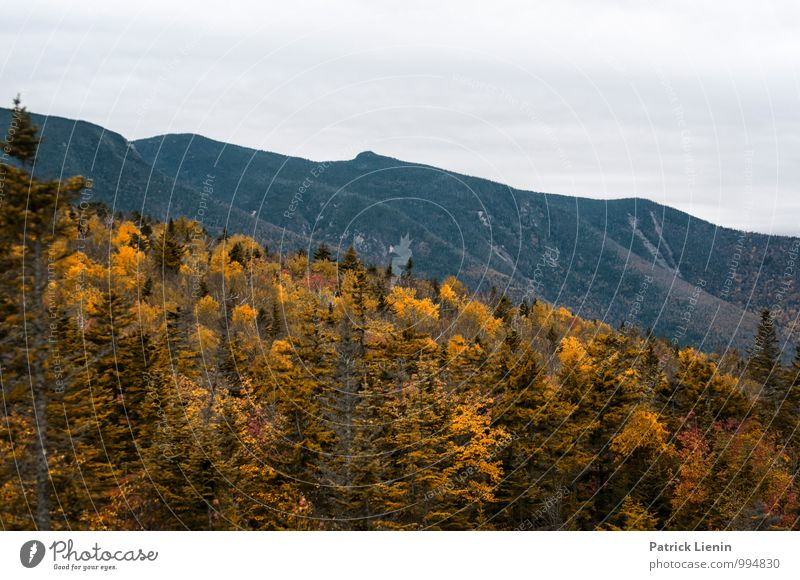 Herbstfärbung in den White Mountains Natur Pflanze Erholung Landschaft Wolken ruhig Ferne Wald Berge u. Gebirge Umwelt Freiheit Zufriedenheit Tourismus Ausflug