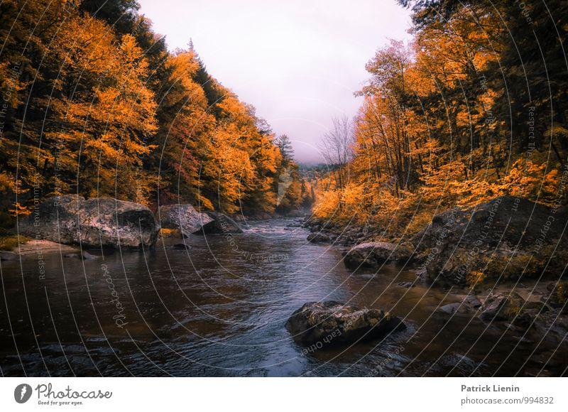 Wild River Natur Ferien & Urlaub & Reisen Pflanze Wasser Baum Erholung Landschaft ruhig Ferne Wald Berge u. Gebirge Umwelt Herbst Freiheit Zufriedenheit Wetter