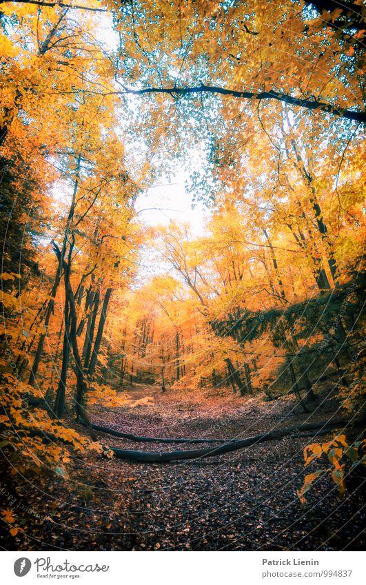 Herbst in Neu England Natur Ferien & Urlaub & Reisen Pflanze Baum Erholung Landschaft Ferne Wald Berge u. Gebirge Umwelt Leben Wege & Pfade Freiheit Tourismus