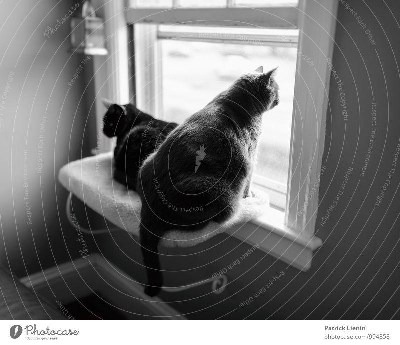 Geschwister Katze Erholung ruhig Haus Tier Fenster Stil Lifestyle Freiheit Wohnung Zufriedenheit Raum Häusliches Leben Freizeit & Hobby elegant sitzen