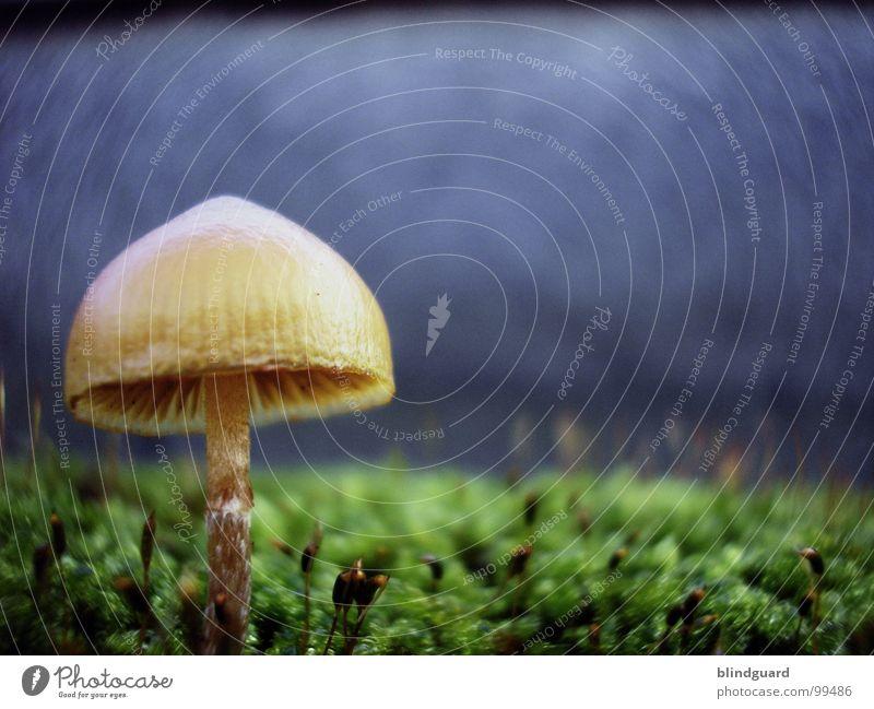 Microworld Natur grün Pflanze gelb Leben Herbst Wand Mauer klein Umwelt Wachstum Blühend Weltall Sonnenschirm Pilz Botanik