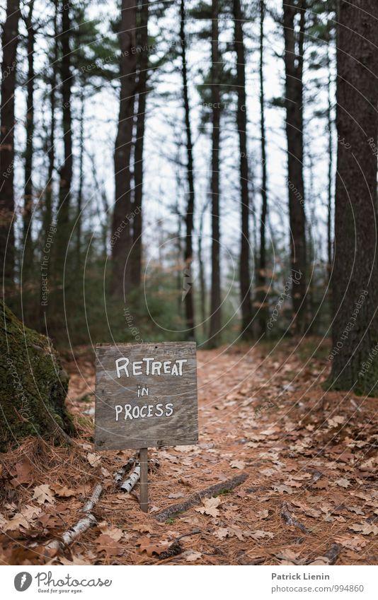 Retreat Natur Pflanze Baum Erholung Landschaft ruhig Ferne Wald Umwelt Gesundheit Lifestyle Erde Zufriedenheit Ausflug Klima Vergänglichkeit