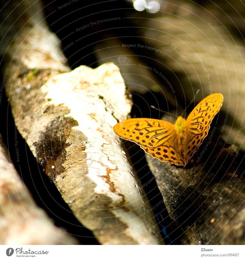 butterfly Schmetterling gepunktet gelb Tier Holz Fühler Unschärfe dunkel Licht Sommer fliegen Flügel mehrfarbig Natur kleintier Baumstamm