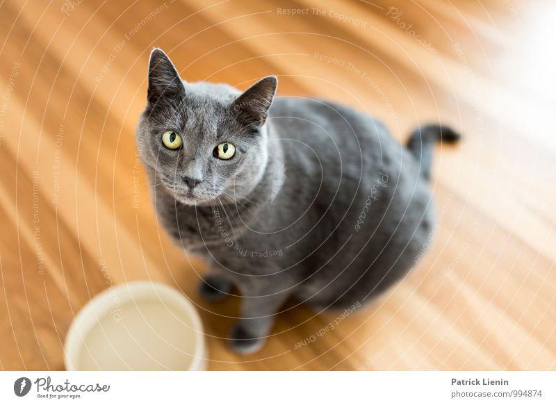 Cowy elegant Stil harmonisch Wohlgefühl Zufriedenheit Sinnesorgane Erholung Häusliches Leben Haus Raum Wohnzimmer Tier Haustier Katze 1 schön einzigartig