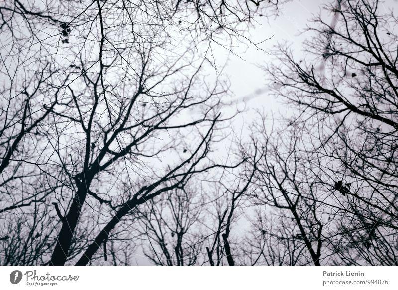 November Blues Wohlgefühl Zufriedenheit Sinnesorgane Erholung ruhig Umwelt Natur Landschaft Urelemente Erde Luft Wolken Winter Klima Wetter schlechtes Wetter