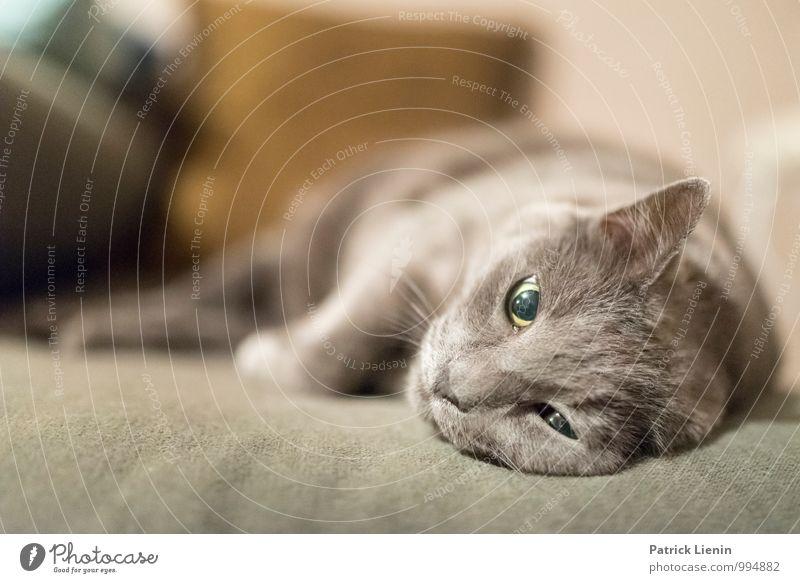 Lieblingshobby Katze schön Erholung Einsamkeit ruhig Haus Tier Leben Freiheit Wohnung Häusliches Leben Zufriedenheit elegant Kraft ästhetisch Kreativität
