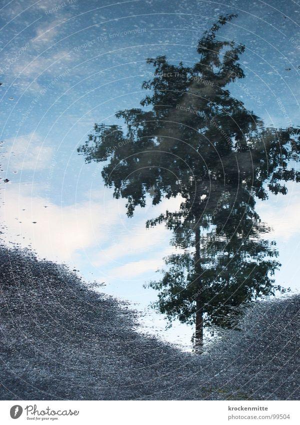 Spiegelwasser Baum Pfütze Blatt Reflexion & Spiegelung nass Spiegelbild Kies Sand Reflektion Regen Wasser Himmel Natur
