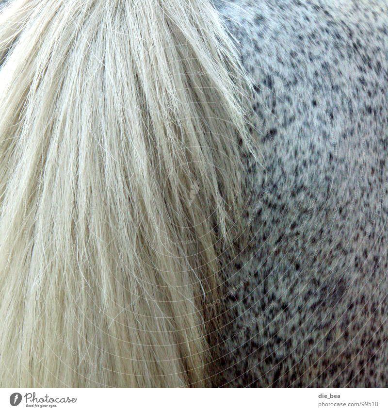 ...von hinten Pferd Schwanz Fell Muster scheckig Hinterteil Säugetier Schimmelpilze Haare & Frisuren