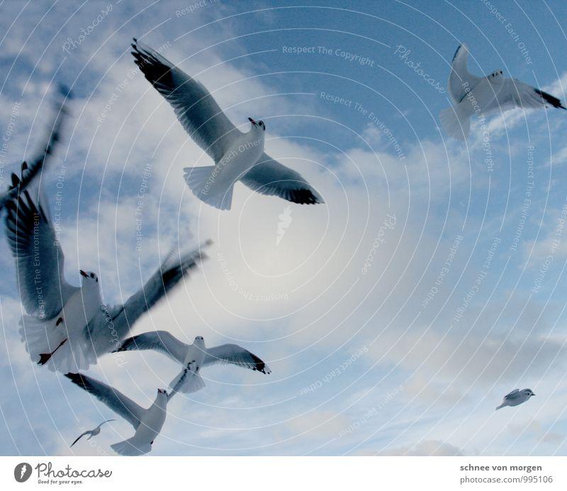 flügelschlag Himmel Natur blau weiß Sommer Erholung Meer ruhig Wolken Tier Umwelt Küste Vogel träumen Wind Flügel