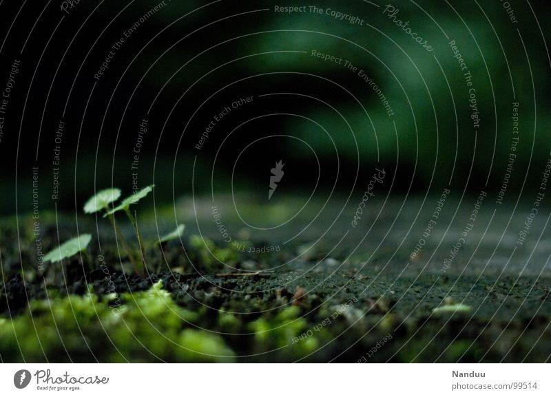 Feentanzplatz Natur grün schön Pflanze Umwelt Landschaft dunkel klein Erde nass Vergänglichkeit nah feucht ökologisch Moos verrotten