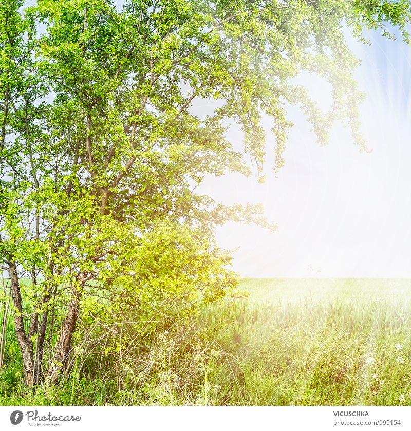 Frühling Sommer Hintergrund mit Weißdorn und Feld Natur Pflanze Himmel (Jenseits) Baum Blatt Hintergrundbild Garten springen Lifestyle Park Design Ast