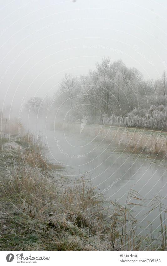 Winter am Fluss Natur Wasser Landschaft ruhig Winter kalt Gefühle Schnee natürlich Glück Park Nebel ästhetisch fantastisch Fluss Frieden
