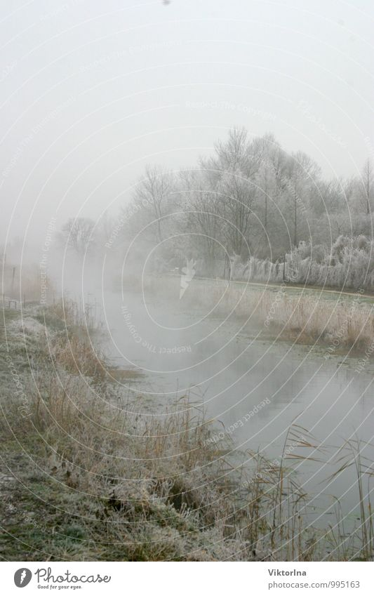 Winter am Fluss Natur Wasser Landschaft ruhig kalt Gefühle Schnee natürlich Glück Park Nebel ästhetisch fantastisch Frieden