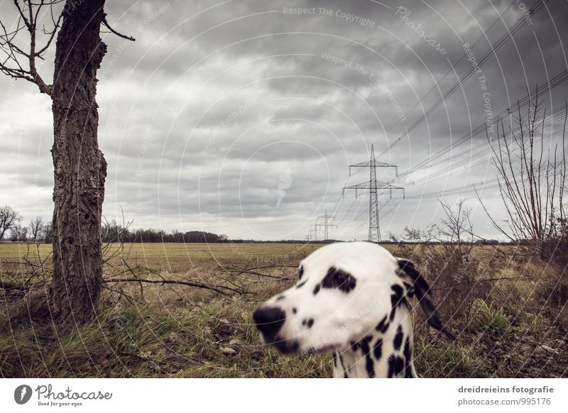 Huch wer guckt denn da? Hund Landschaft Tier Ferne Winter dunkel Herbst Stimmung Horizont Wetter Feld trist bedrohlich Unwetter Sturm Strommast