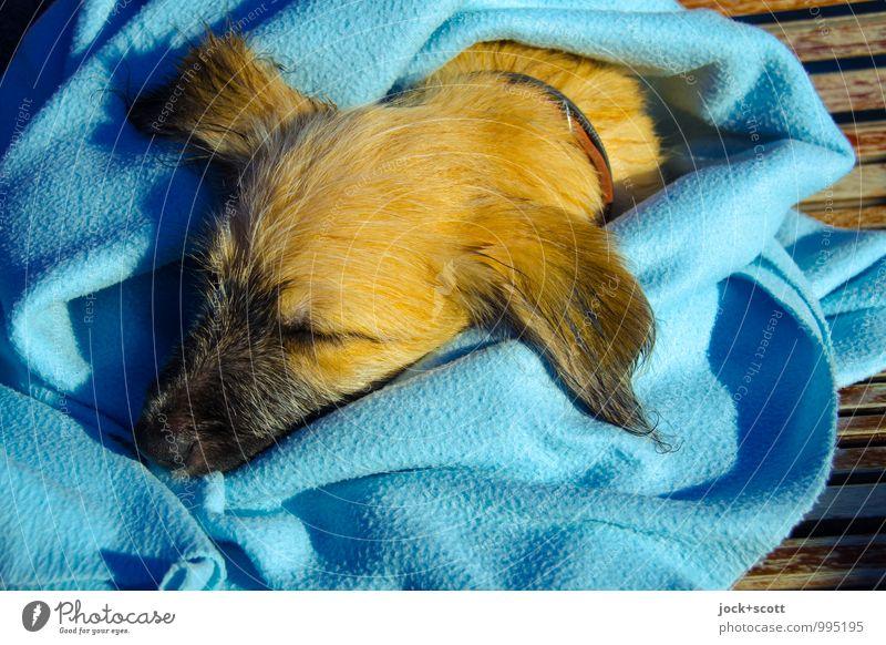 Kopf hoch! Hund Draufsicht Tierporträt Schatten Warmes Licht Liegeplatz Holzbank bedeckt Mittelpunkt unschuldig Erschöpfung Tierliebe blau Geborgenheit niedlich