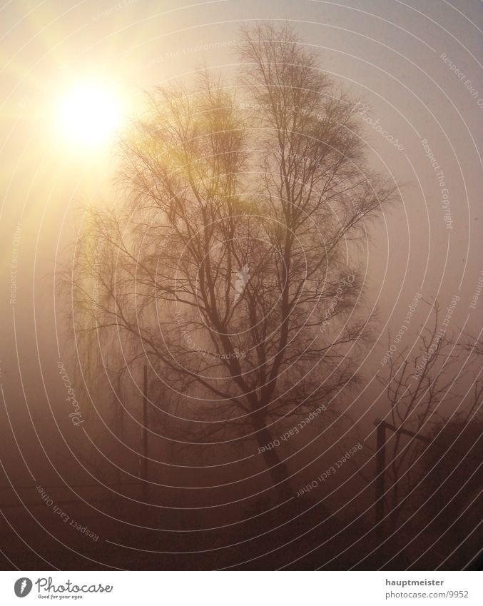 Nebelmorgen Baum Sonne kalt Nebel Sonnenaufgang