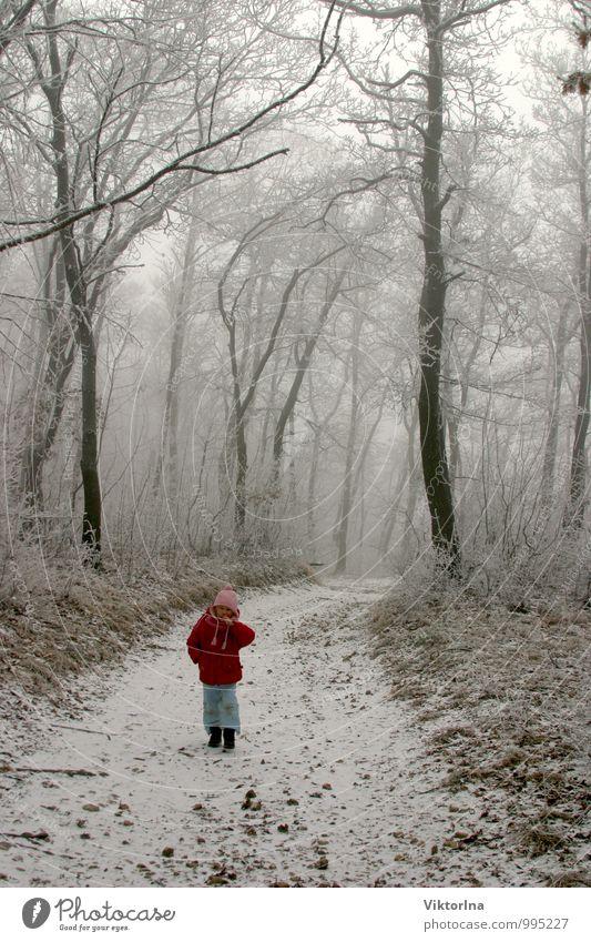 Winterwald Mensch Kind Natur Baum Landschaft Mädchen Winter Wald Umwelt Schnee Wege & Pfade natürlich Stein Familie & Verwandtschaft Park Eis