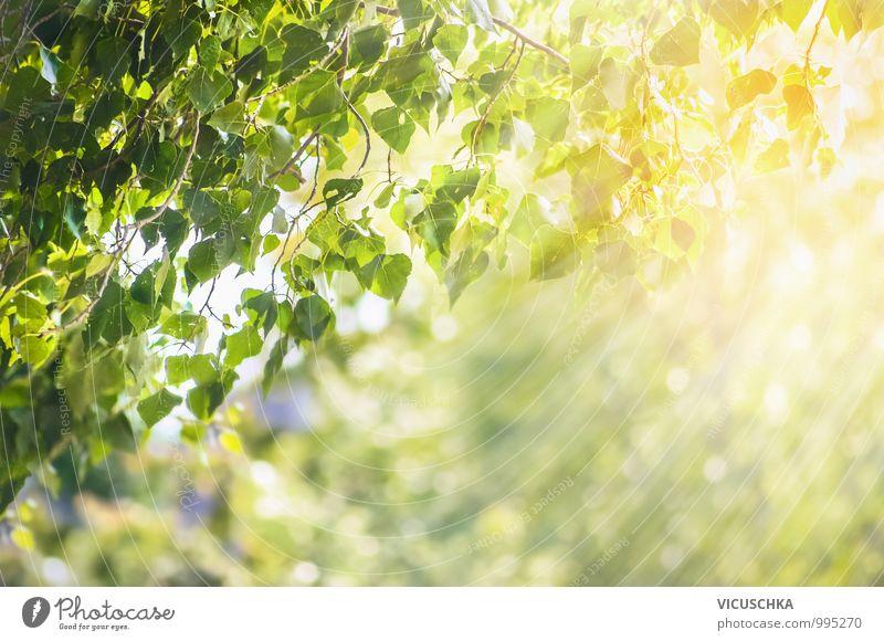 Frühling Sommer Hintergrund mit grünen Blättern Natur Pflanze schön Baum Blatt Wald Garten Park Wetter Design Ecke Schönes Wetter Zweig