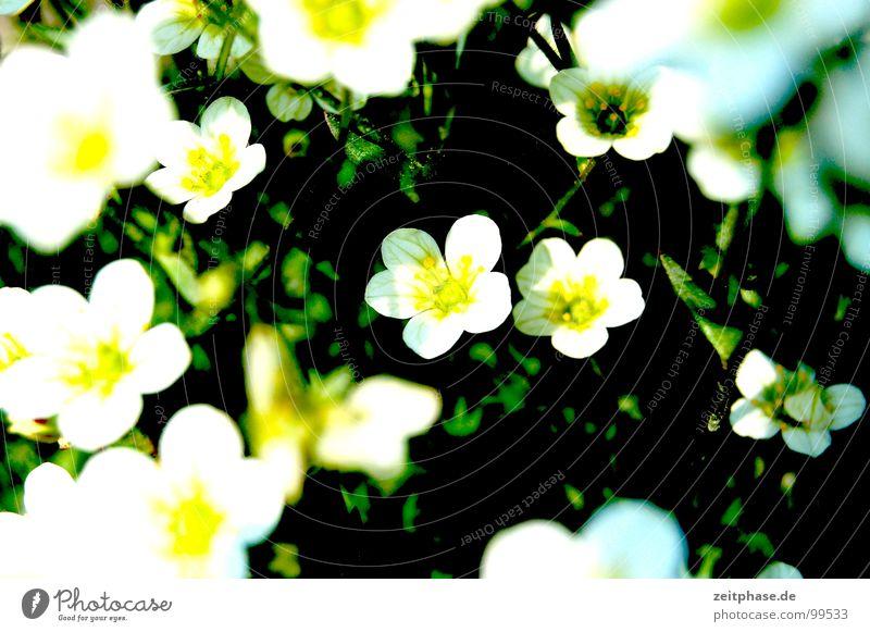 Blumenfest weiß grün Sommer Freude gelb Wiese Glück träumen Blumenstrauß