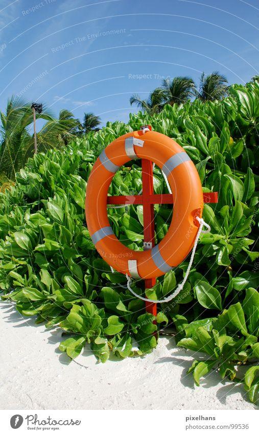 Strandschwimmer grün weiß Palme Sträucher Rettung Mittag heiß Sommer Malediven blau Seil Kreis Rettungsring Sicherheit Blauer Himmel Totale orange kreisrund