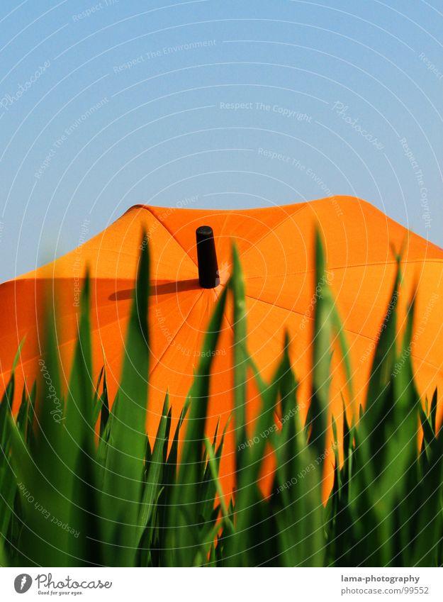 tiekgibrafierD Cloppenburg Regenschirm Sonnenschirm Unwetter Wolken Gras Halm Wiese Sommer Feld grün Frühling Blumenwiese Umwelt sommerlich Pflanze