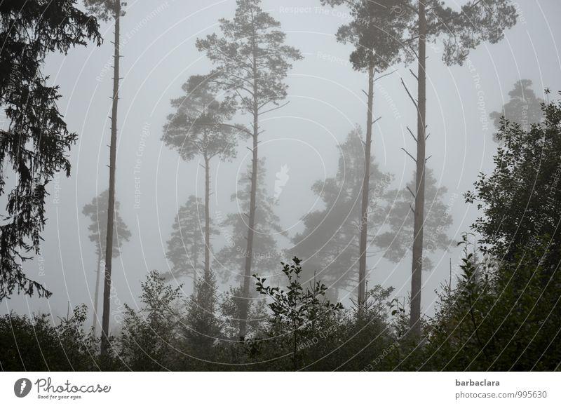 Grauwald Himmel Natur Baum Landschaft Wald Traurigkeit Herbst grau Stimmung Linie Nebel Sträucher hoch Klima Vergänglichkeit Hoffnung