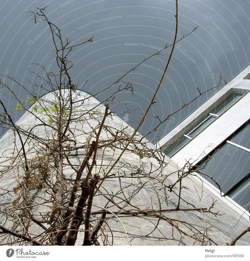 hochgewachsen II... Gebäude Haus Fenster Beton grau bewachsen Pflanze Ranke Stengel Blatt Wolken weiß grün braun emporragend befestigen durcheinander modern