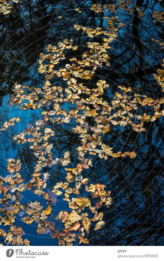 Laubsee Natur blau Pflanze Wasser Baum Blatt Landschaft schwarz dunkel Wald Umwelt gelb Herbst Tod Garten See