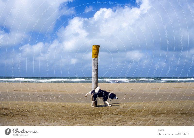 Kleiner Pisser Sommer Natur Landschaft Sand Schönes Wetter Küste Strand Nordsee Meer Tier Haustier Hund 1 Wasser lustig blau gelb weiß Beine Pinkler urinieren