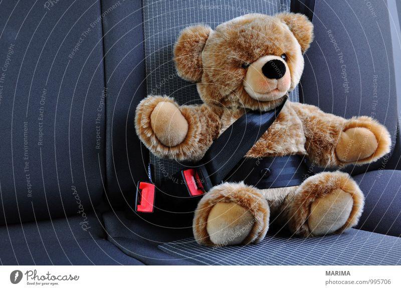 Teddy belted in the car Kind schwarz Straße braun PKW sitzen geschlossen Schutz Sicherheit fahren Spielzeug KFZ Teddybär Wagen Stofftiere Meerstraße
