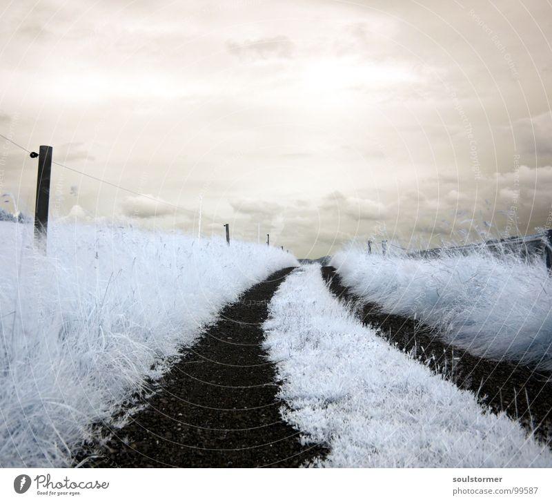 step into... Infrarotaufnahme weiß Farbinfrarot Personenzug schwarz Wolken Gras Wegrand Wiese Holzmehl Wood-Effekt traumhaft außergewöhnlich träumen Zaun