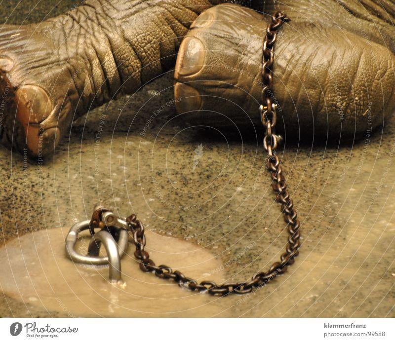 Freiheit Tier Einsamkeit Tod grau Traurigkeit Kraft frei Bodenbelag Suche Trauer Reinigen Afrika Zoo Baumstamm Kette