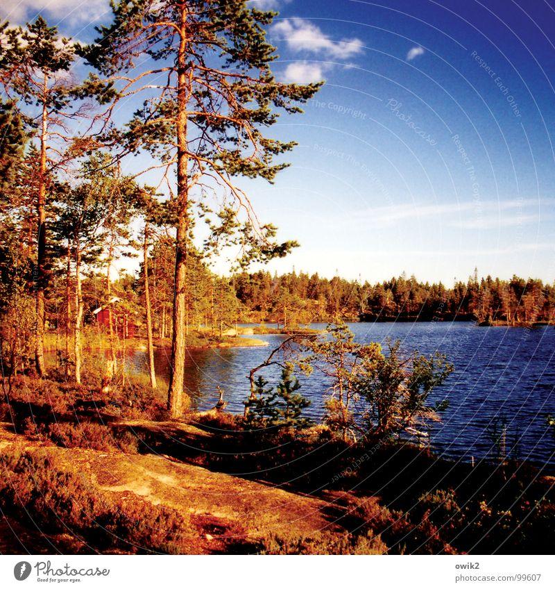 Angermanland Himmel Natur Ferien & Urlaub & Reisen Pflanze Wasser Baum Landschaft Ferne Wald Berge u. Gebirge Umwelt Freiheit See Tourismus Freizeit & Hobby Idylle