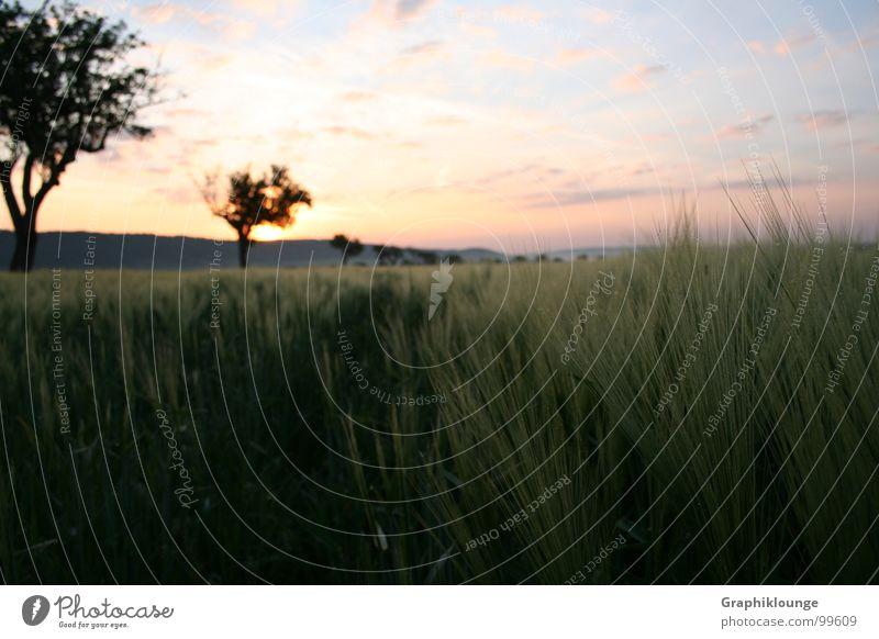 Stiller Morgen || kalt rein frisch See harmonisch Reflexion & Spiegelung ruhig mehrfarbig Wolken Baum Gras Feld Himmel Landschaft Natur Bootsteg Morgendämmerung
