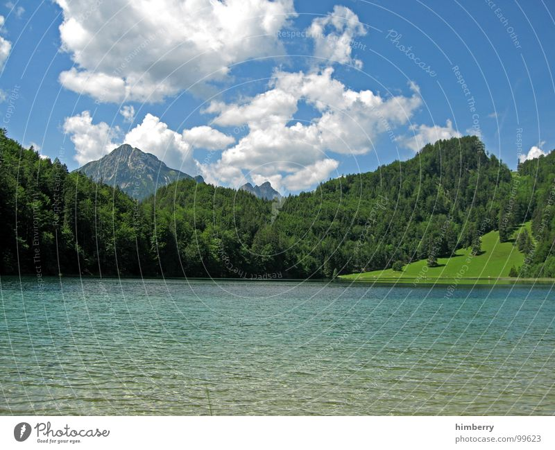 riviera royal XIV Gras Sommer Naturgesetz Wiese grün Umwelt Wolken Wildnis Himmel Grünfläche Österreich Wald Hügel Berge u. Gebirge Landschaft Pflanze Firmament