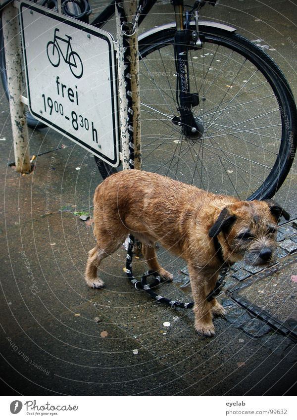 Wir müssen draussen bleiben Hund nass feucht Trauer angeleint Bürgersteig Haustier Gabel Regen Sommer Ärger Tier vernachlässigen ausgesetzt Fell