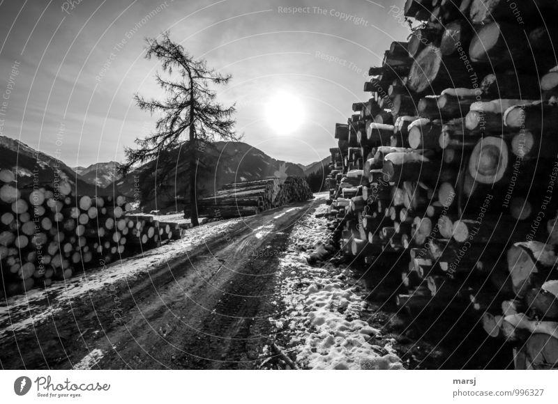 Genügend Holz Himmel Natur Baum Einsamkeit Wolken Ferne Winter dunkel kalt Traurigkeit Herbst Eis Feld trist authentisch bedrohlich
